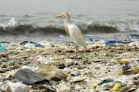 A bird stands on a beach covered with trash in Hann Bay in Dakar, Senegal