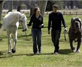 """<p>When a photo appeared of a woman walking her horse alongside a man with a dog named Hercules, the collective internet freaked out. The internet hoax claimed that Hercules weighed 282 pounds and was as tall as a horse. A lot of people fell for it since the photo was believable, although it's hard to imagine that a man could handle such a huge <a href=""""https://www.popularmechanics.com/science/a33349845/dogs-magnetic-field-science/"""" rel=""""nofollow noopener"""" target=""""_blank"""" data-ylk=""""slk:dog"""" class=""""link rapid-noclick-resp"""">dog</a> on a basic leash.<br></p>"""