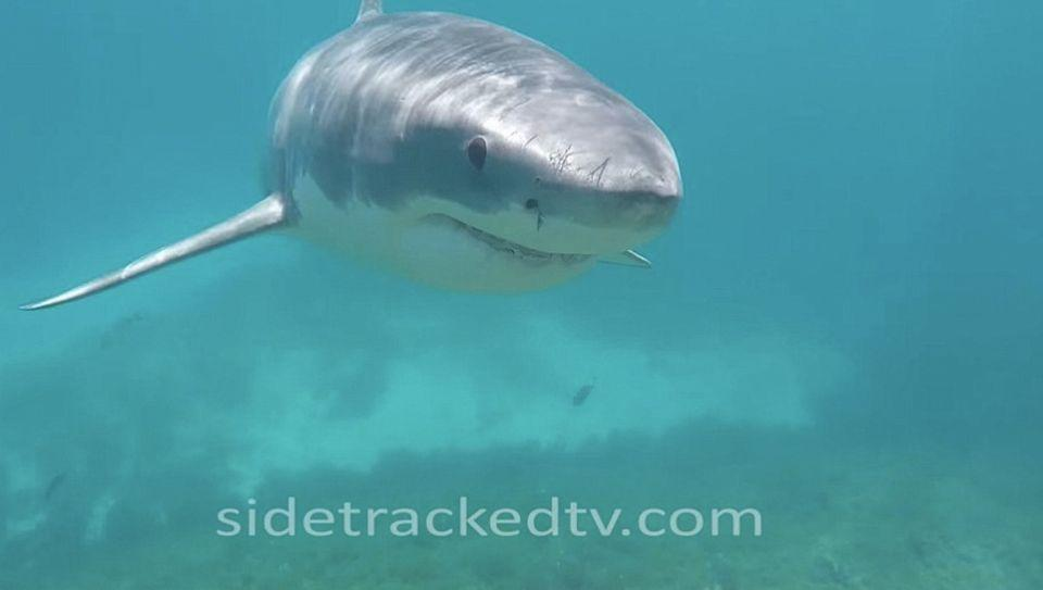 The shark circled around Mr Gibb multiple times during the encounter. Photo: Side Tracked TV Multimedia Productions