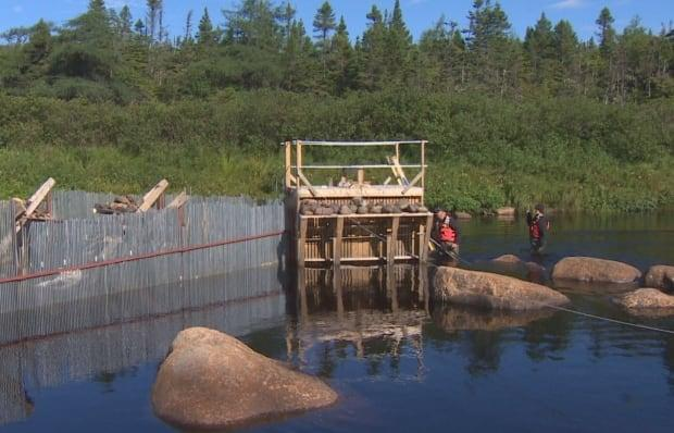 Grieg says it's spent more than $200,000 in 2021 to construct and operate this fish counting fence in the Come by Chance River. (Mark Quinn/ CBC - image credit)