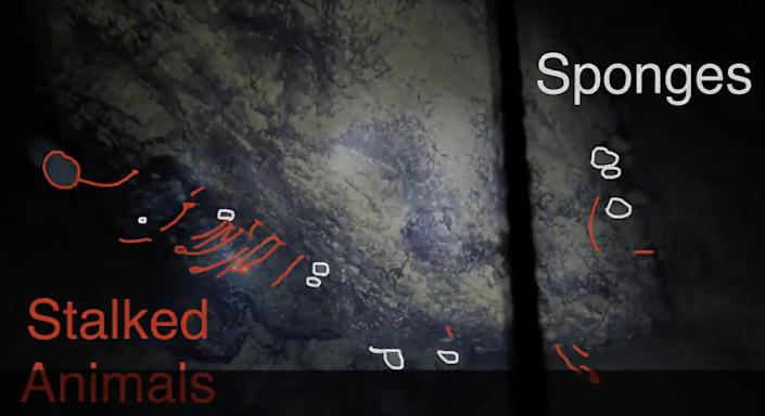 annotated video footage, new discovery animals, Antarctica