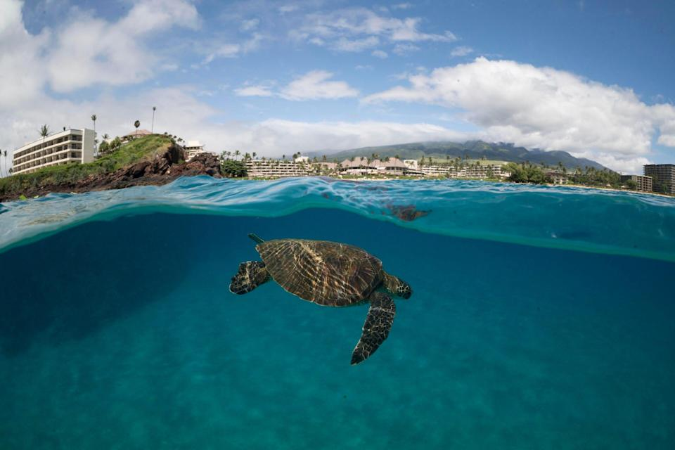 """An undersea world straight out of """"Finding Nemo"""" is waiting for you just off the shore of Black Rock Point in Maui."""