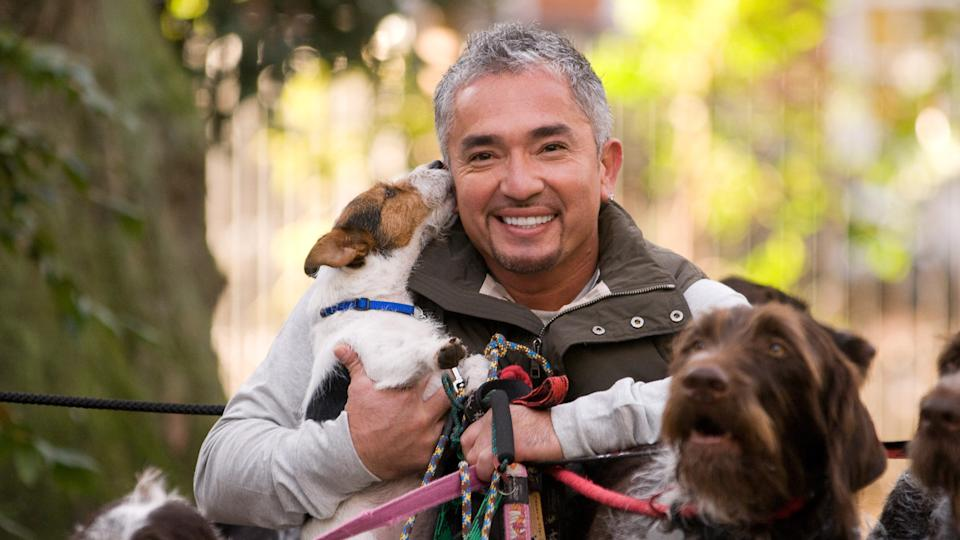 Cesar Millan, dog trainer to the stars, London, Britain - 25 Nov 2009Cesar Millan, dog trainer to the stars,brings his hit tour to the UK for the first time in March 2010.
