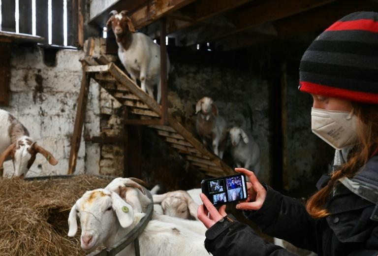 The farm in Lancashire, northwestern England, offers a five-minute appearance by a goat on any video-calling platform for £5 (nearly $7, 6 euros)