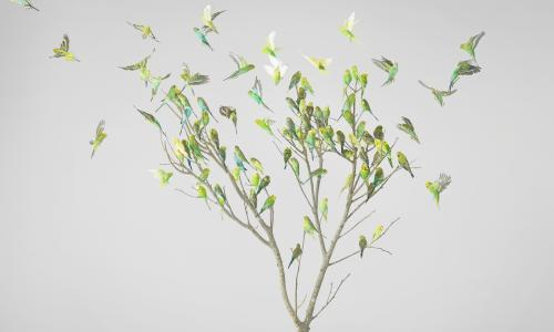 Birds of a green and yellow feather flock together in artistic glory
