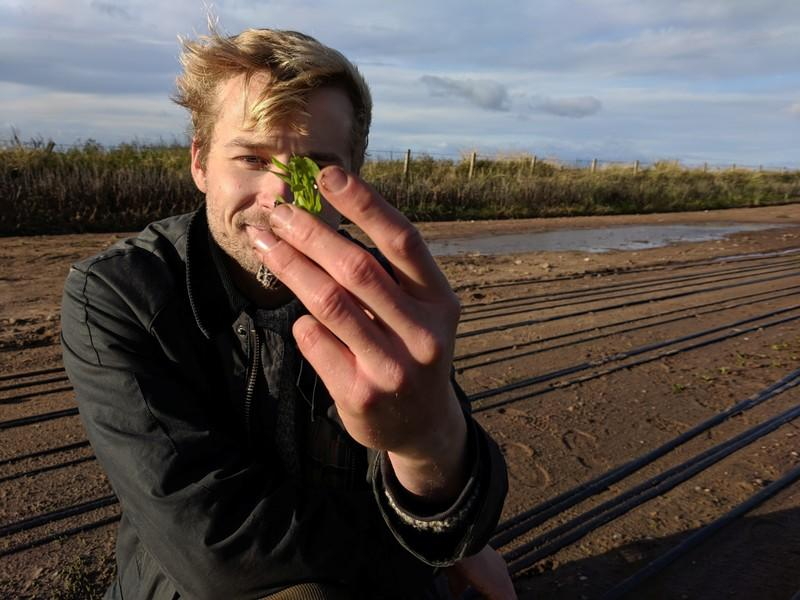 Yanik Nyberg, founder and director of Seawater Solutions, plants a sea aster seedling in a field irrigated by sea water, an experimental farming technique designed to reduce freshwater consumption, near Turnberry in Ayreshire