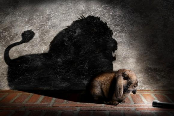 Flashlight shining close-up on a flop-eared rabbit; Shadow on the wall shows a lion.