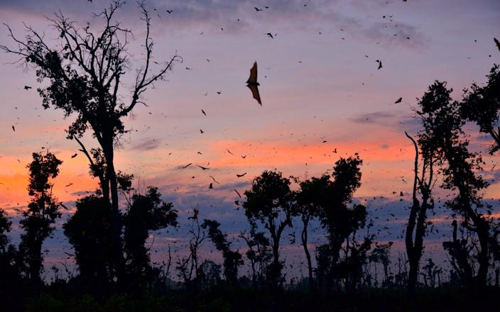 Bats in night sky - Getty Images