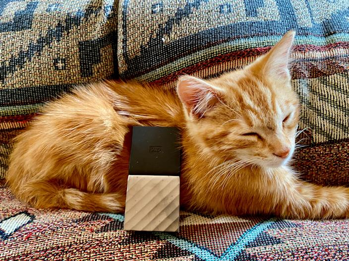 "Jinx rests with a 2 TB Western Digital ""My Passport"" SSD drive by his side"