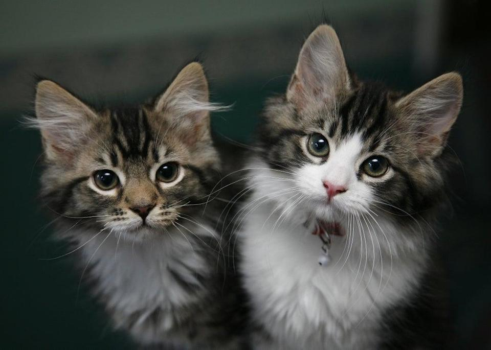 There are now around 12 million cats in UK homes (Nick Ansell/PA) (PA Wire)