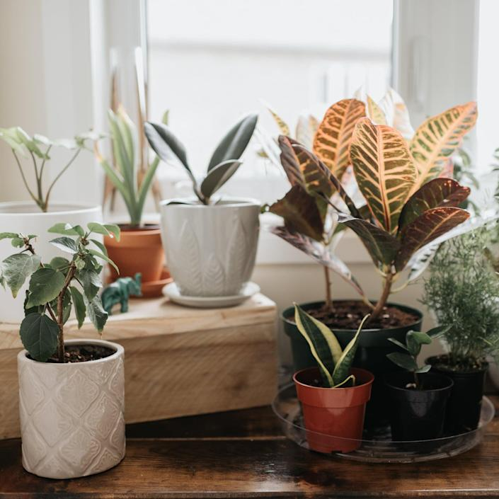 12 LED Grow Lights to Help Your Indoor Plants Thrive, Even in the Winter