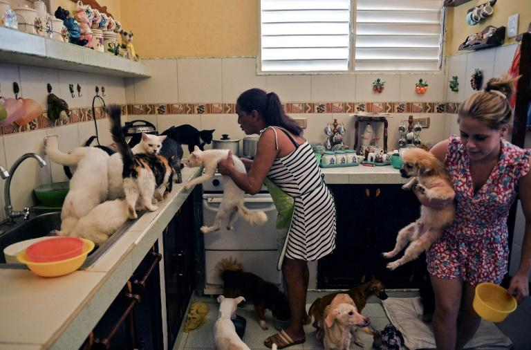 Cuban animal lovers hope new law changes attitudes