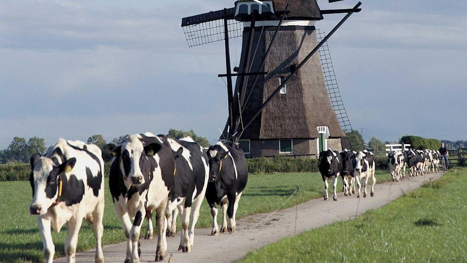 Here's why the Netherlands is planning to cut livestock numbers by a third