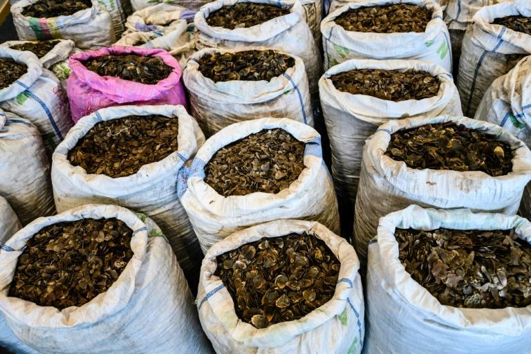 The illegal trafficking of wildlife such as endangered pangolin scales is worth an estimated $20 billion worldwide