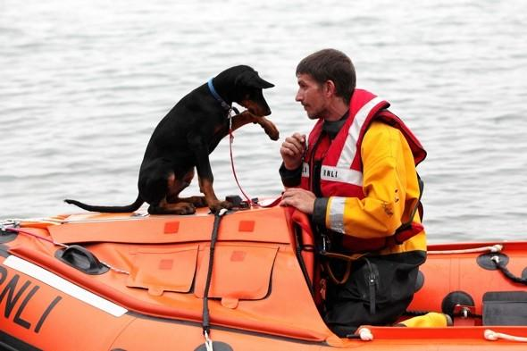 Gorgeous puppy helps rescue swimmer in trouble on Swansea beach