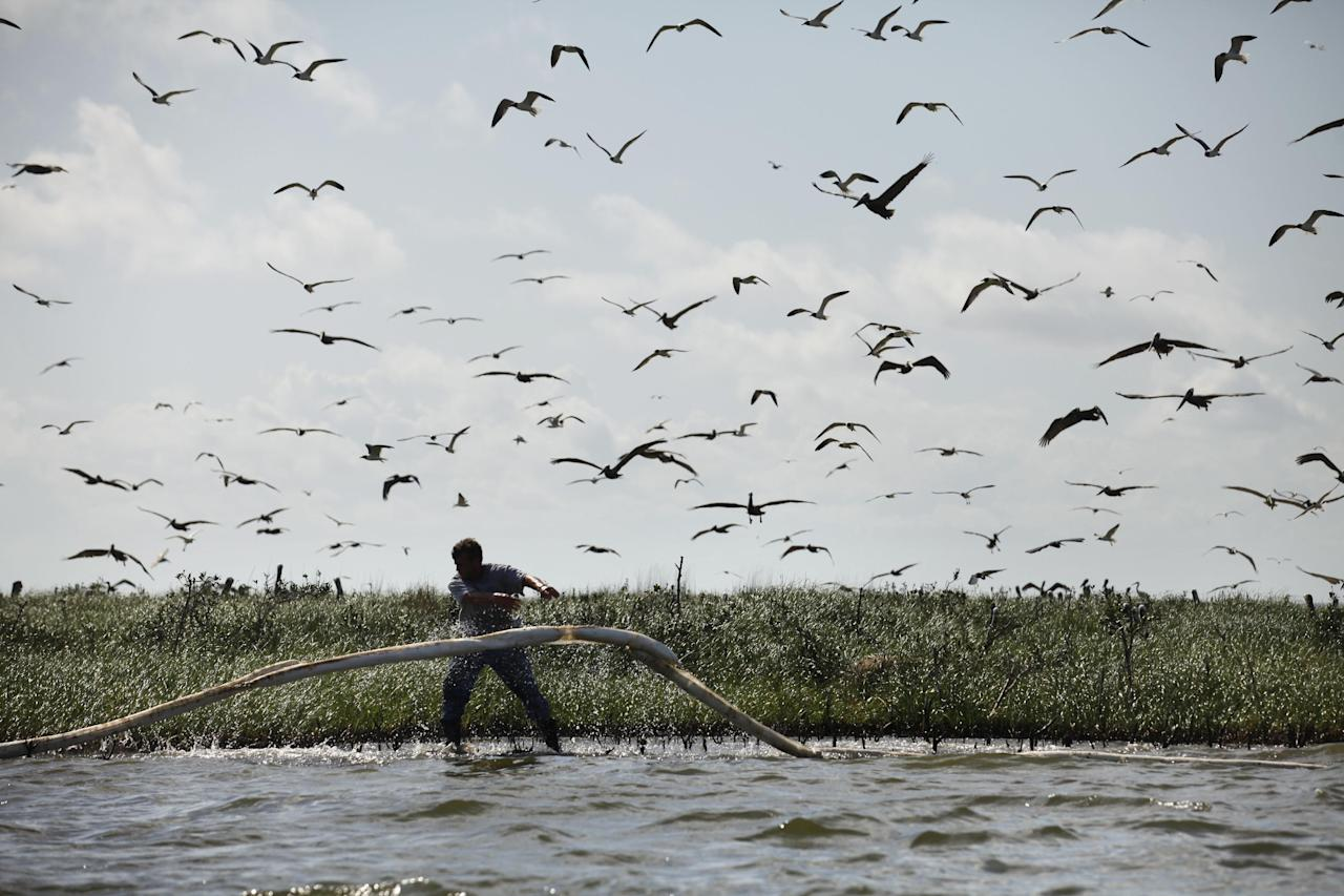 FILE - In this May 22, 2010 file photo, a man lays oil absorbent boom as oil from the Deepwater Horizon oil spill impacts Cat Island in Barataria Bay, in Plaquemines Parish, La. (AP Photo/Gerald Herbert, file)
