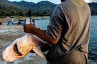 Thirty-seven percent of 1,200 shark and ray species evaluated are directly threatened with extinct (AFP/CHAIDEER MAHYUDDIN)