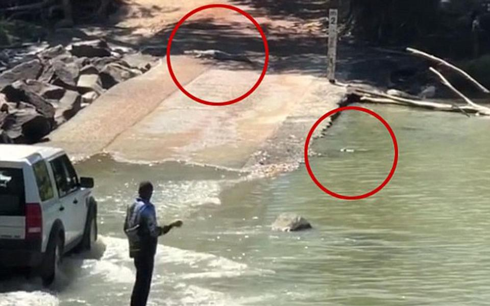 Kaff Eine said the crocs were just metres away from the fisherman. Source: Supplied / Kaff Eine Paints