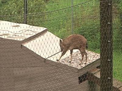 Floods fed by a steady torrential downpour have forced residents to evacuate their homes and animals to flee their pens at a zoo in a northeast Minnesota city. (June 20)