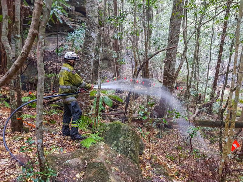Firefighters water-bombed the region that's home to the pines and ventured to a remote canyon to protect them from approaching flames. (Photo: New South Wales Government)