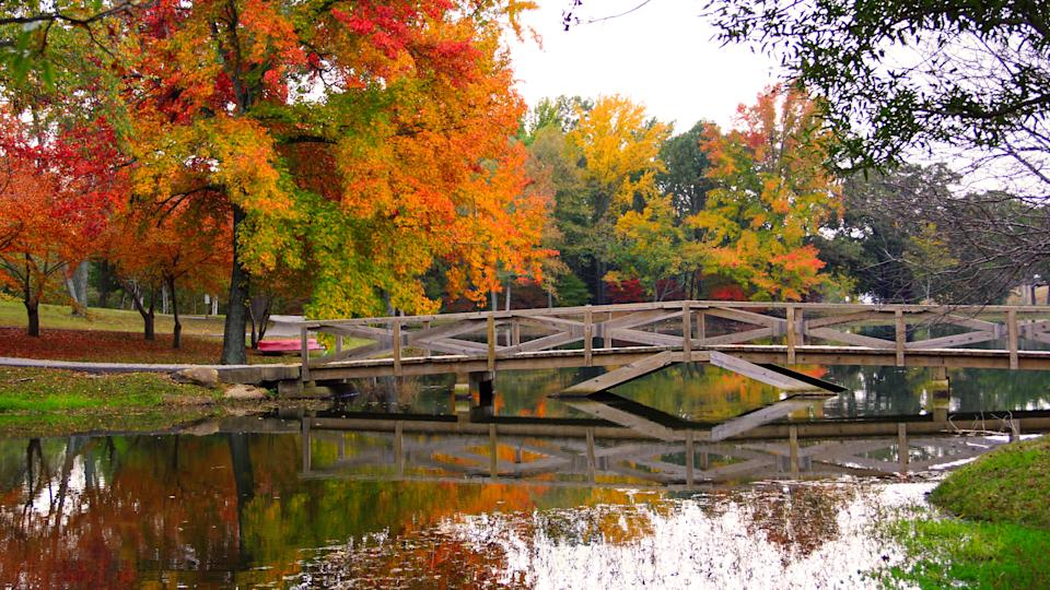 Pond with a Bridge in the Fall in Arkansas - Image.