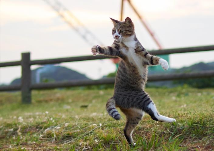 <p><span>Hisakata says he never thought of street cats as particularly playful, and was surprised by the reactions of a selected few when he first tried to interact with them with a cat toy. </span>(Photo: Hisakata Hiroyuki/Caters News) </p>
