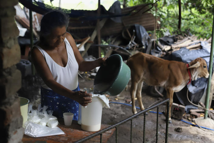 Ines Flamenco, a recipient of a new home in the middle-class residential community Ciudad Marsella, prepares baggies filled with goat, and cow milk, on her farm in Los Angelitos, El Salvador, Wednesday, Aug. 4, 2021. In Ciudad Marsella it is prohibited to keep animals, and that means no goats or cows, and no chickens and no eggs to eat or sell. As of July, at least 28 families have given back the houses and returned to Los Angelitos. (AP Photo/Salvador Melendez)