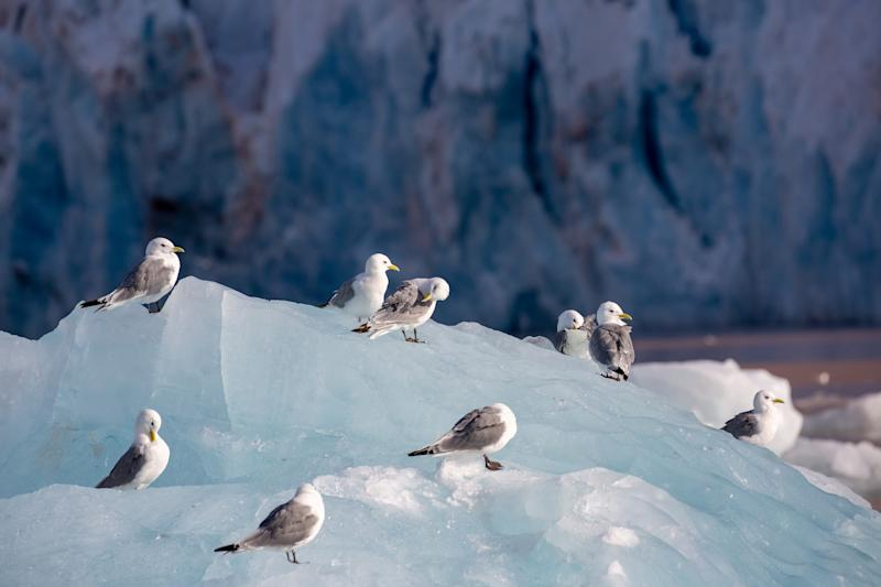 Seabirds in the Arctic Circle - getty