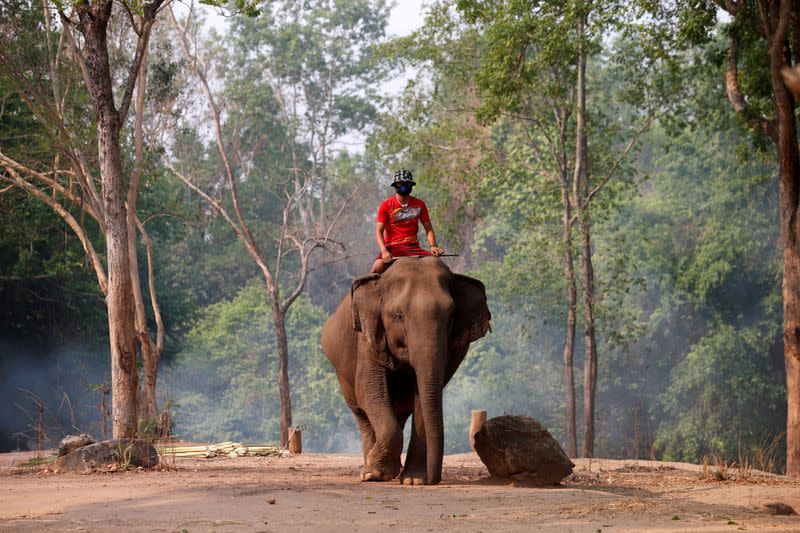 Hungry times at Thailand's elephant sanctuaries as coronavirus hits tourism
