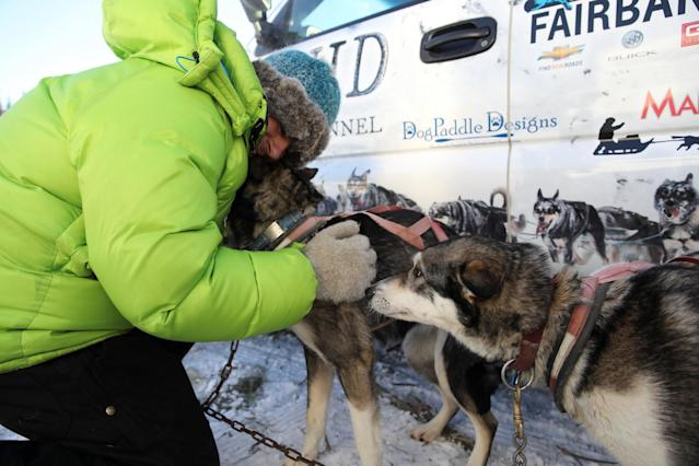 <p>A handler for musher Cody Strathe prepares dogs for the trail at the official restart of the Iditarod, a nearly 1,000 mile (1,610 km) sled dog race across the Alaskan wilderness, in Fairbanks, Alaska </p>