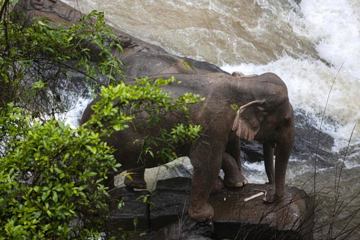 Elephants are stuck Oct. 5 on a small cliff at a waterfall at Khao Yai National Park in central Thailand.