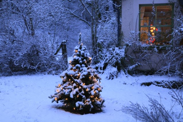 Christmas tree with fairy lights outside country c