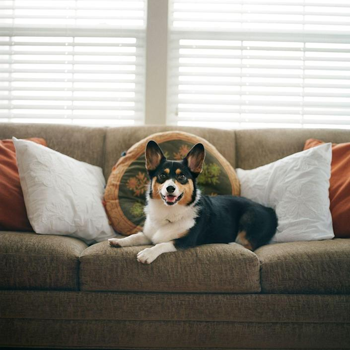 """<p>To <a href=""""https://www.realsimple.com/home-organizing/cleaning/cleaning-living-room/how-clean-upholstery"""" rel=""""nofollow noopener"""" target=""""_blank"""" data-ylk=""""slk:freshen up the fabric on your upholstery"""" class=""""link rapid-noclick-resp"""">freshen up the fabric on your upholstery</a>, all you need is a vacuum, a few clean white cloths, a gentle clear dish soap, a horsehair upholstery brush, and a small bucket, according to <em>Real Simple</em>. To start, vacuum the surface using the upholstery attachment. Then, pour half a teaspoon of clear dish soap in a small bucket and with warm water. Dip a soft upholstery brush in the suds only and lightly sweep the fabric in small sections. Finish by wiping the fabric with a clean, damp cloth. </p><p>For stains on linen, cotton, jacquard, and polyester-acrylic blends, try using <a href=""""https://www.amazon.com/Capture-Carpet-Cleaner-Release-Pre-Mist/dp/B000HM8I1E"""" rel=""""nofollow noopener"""" target=""""_blank"""" data-ylk=""""slk:Capture Soil Release Pre-Mist"""" class=""""link rapid-noclick-resp"""">Capture Soil Release Pre-Mist</a> to remove. Then follow that up with just enough <a href=""""https://www.amazon.com/Capture-Pound-Resolve-Allergens-Furniture-Allergies/dp/B01MS4I0H2"""" rel=""""nofollow noopener"""" target=""""_blank"""" data-ylk=""""slk:Capture Carpet and Rug Dry Cleaner"""" class=""""link rapid-noclick-resp"""">Capture Carpet and Rug Dry Cleaner </a>to cover the stain and gently rub the powder into the fabric with a dry cloth. Finish by vacuuming. </p>"""