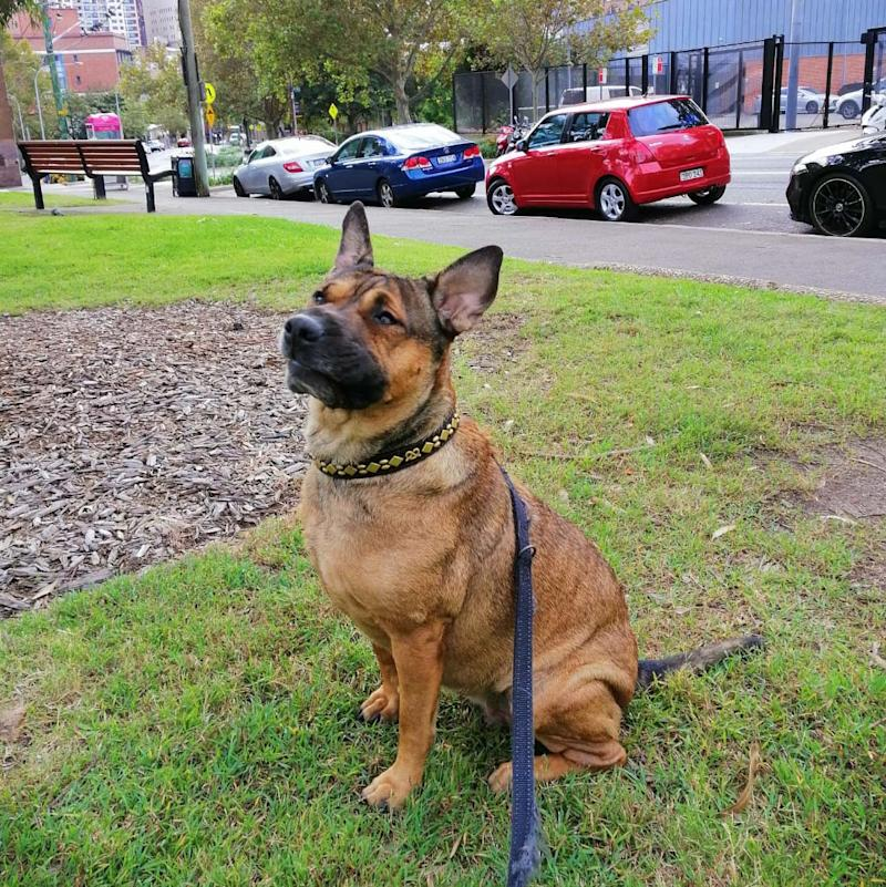Before her death Bu tested positive for the rare bacterial disease, leptospirosis. Her owner believes she contracted it from the laneway behind their apartment block. Source: Supplied / Allan Quinnell