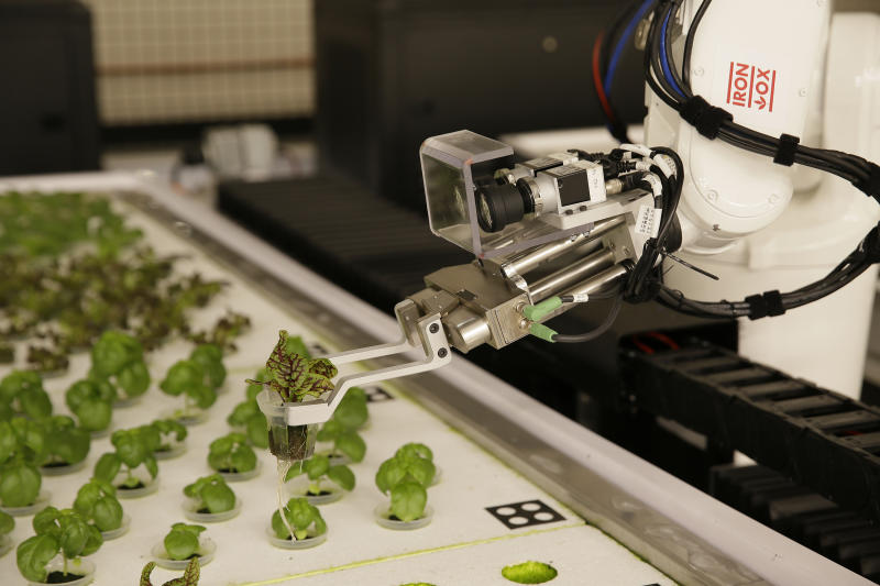 In this Thursday, Sept. 27, 2018, photo a robotic arm lifts plants being grown at Iron Ox, a robotic indoor farm, in San Carlos, Calif. At the indoor farm, robot farmers that roll maneuver through a suburban warehouse tending to rows of leafy, colorful vegetables that will soon be filling salad bowls in restaurants and eventually may be in supermarket produce aisles, too. (AP Photo/Eric Risberg)