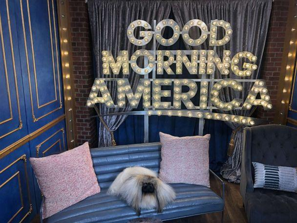 PHOTO: Wasabi, the Pekingese, visited 'Good Morning America' after he won Best in Show at the American Kennel Club National Championship. (ABC News)