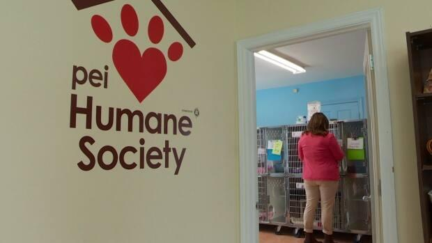 The P.E.I. Humane Society has redesigned its foster program to get more animals in more homes. (Laura Meader/CBC - image credit)