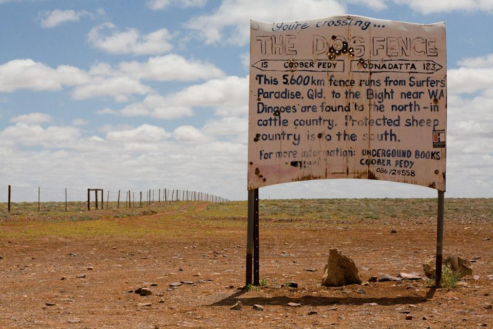 While domestic dogs are allowed south of the dog fence, dingoes must be destroyed. Source: Getty
