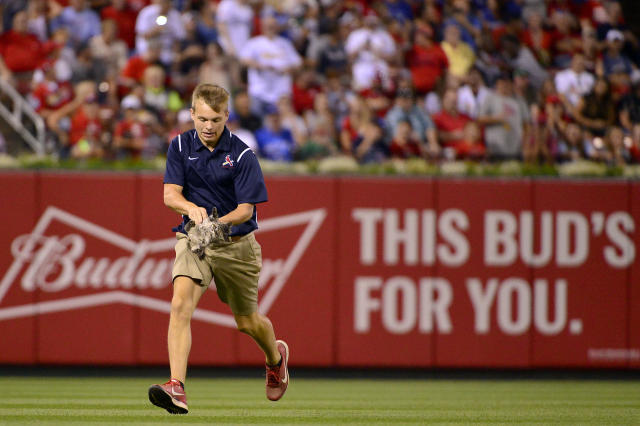 <p>A member of the St. Louis Cardinals ground crew runs off the field with a cat that ran on the field during the sixth inning against the Kansas City Royals at Busch Stadium. Mandatory Credit: Jeff Curry-USA TODAY Sports </p>