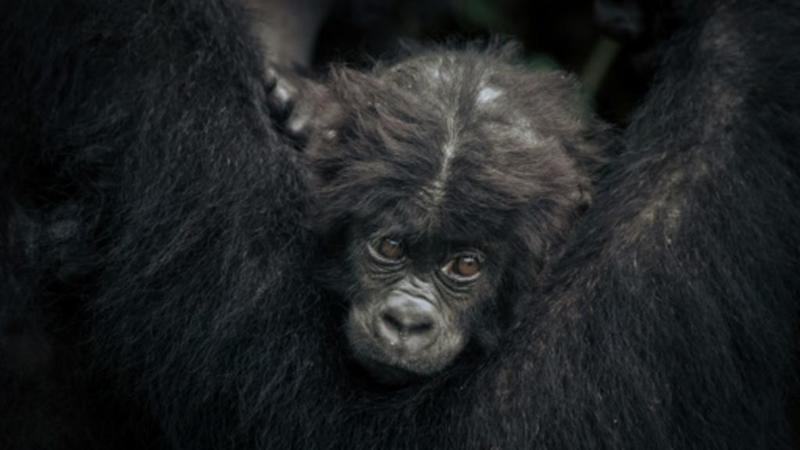 Humans have triggered 'catastrophic' collapse of wildlife, WWF warns
