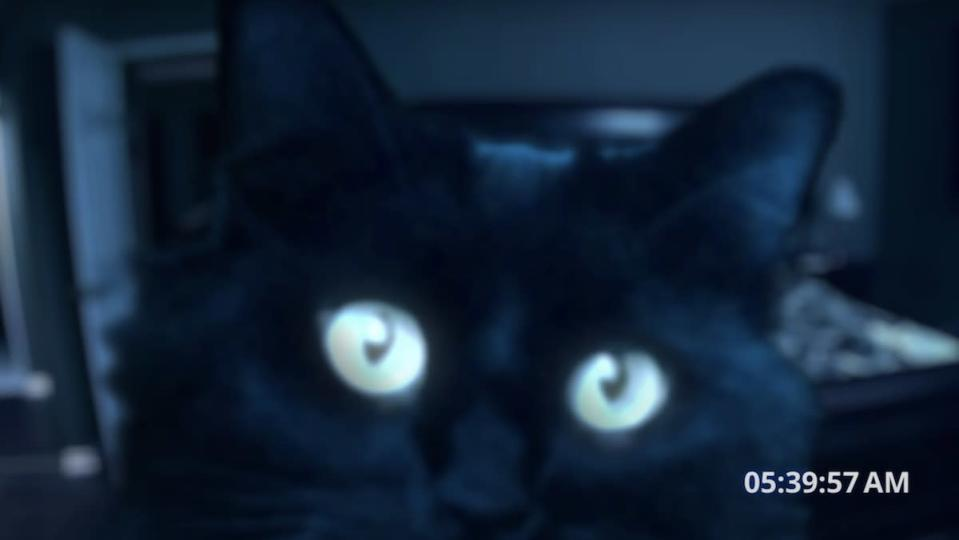 """Cat Haunts Owners in """"Paranormal Activity"""" Spoof"""