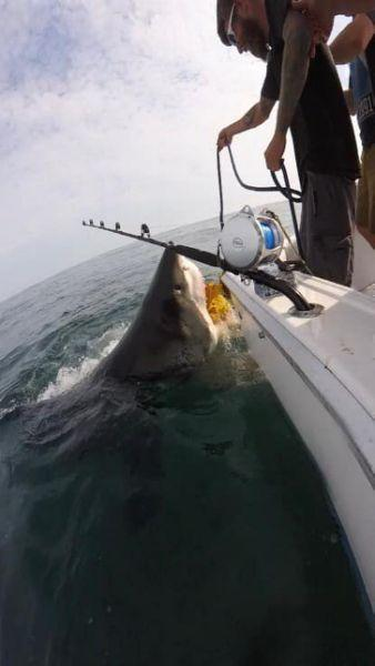 Huge great white shark surprises stunned New Jersey fishermen