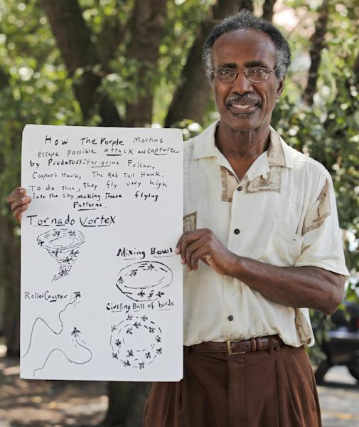 """Retired teacher and amateur birder, Adolph White holds up a poster he drew of purple martins under pear trees where the birds roost, in Richmond, Va., Wednesday, Aug. 1, 2012. The birds once scorned for the droppings they leave are now celebrated with their own festival called """"Gone to the Birds."""" (AP Photo/Steve Helber)"""