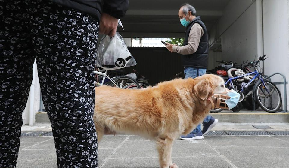 A dog wearing a protective mask is seen outside a coronavirus testing centre near Jat Min Chuen Estate in Sha Tin. Photo: K. Y. Cheng