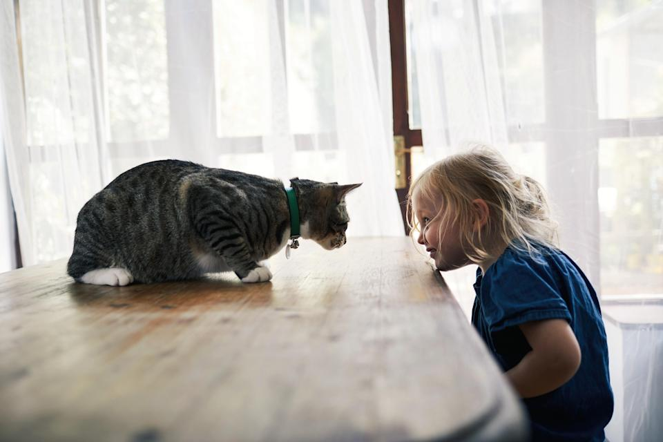 Even the most well-behaved pets have a tipping point. Source: Getty