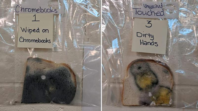 The dirty hands bread experiment showing (left) a bread touched by a laptop showing dark mould and (right) a slice touched by unwashed dirty hands showing yellow and green mould.