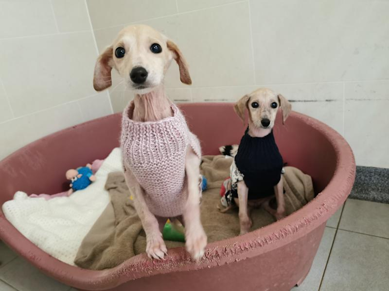 Holly and Ivy keeping cosy in their Christmas jumpers (Photo: RSPCA Millbrook Animal Centre)