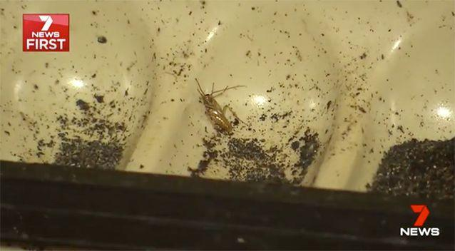 Cockroaches forced the closure of the business. Source: 7 News