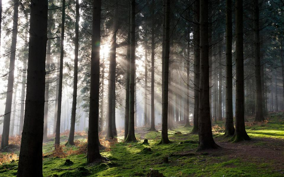 Sample the seasonal delights of the Forest of Dean - Getty