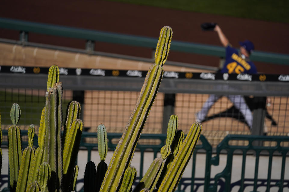 Cactuses stand near the bullpen as Milwaukee Brewers pitcher Brad Boxberger warms up during the team's spring baseball game against the Arizona Diamondbacks in Scottsdale, Ariz., Monday, March 1, 2021. (AP Photo/Jae C. Hong)